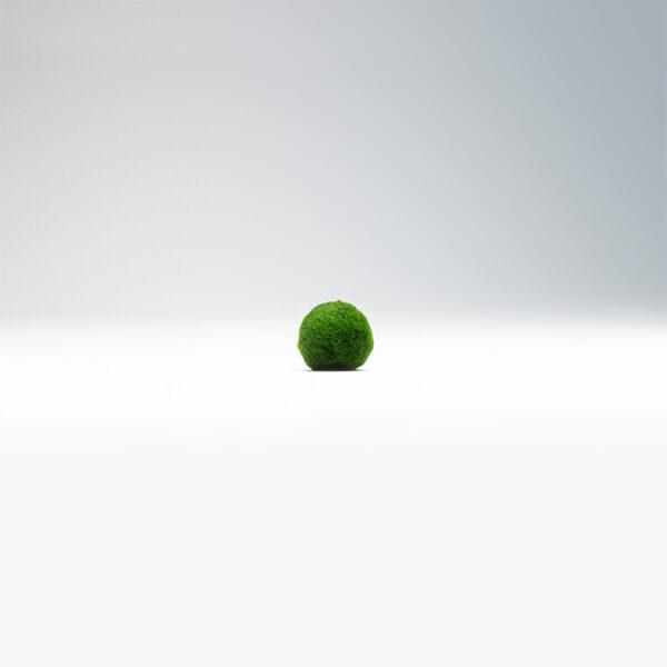řasokoule malá